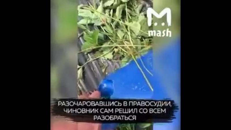 - А вот и полная история хабаровского чиновника который сдал свой участок девушке фермеру..mp4