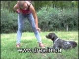 С какого возраста дрессировать щенка