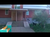 Набережные Челны: бродячие собаки 01.07.2014