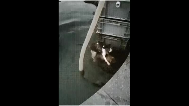 Собака спасает кошку