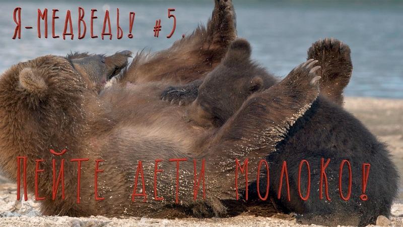 Мимишки. Пейте дети молоко! Бурый медведь5. Природа для самых маленьких.