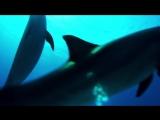 Фридайвинг со свободными дельфинами