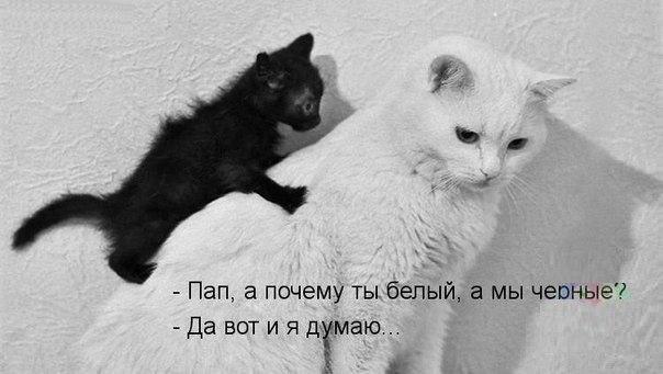 думай Васька