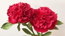 ABC TV | How To Make Peony Paper Flower With Shape Punch 1 - Craft Tutorial