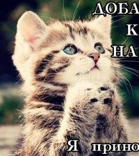 Аня Платонова, 30 ноября 1999, Ярославль, id119729130