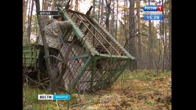 Медведь задрал ещё четыре собаки в посёлке Маркова