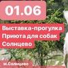 Выставка-прогулка с пушистыми из Приюта Солнцево