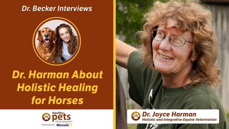 Холистическое лечение лошадей / Holistic Healing for Horses