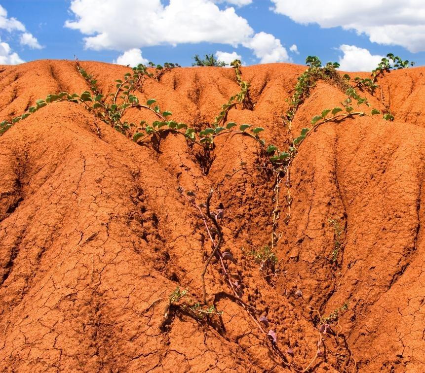 Испытание почвы может помочь в растениеводстве или новом строительстве.
