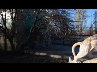 ОБЗОРНАЯ ПРОГУЛКА по Парку Львов Тайган .Часть 1Крым .Белогорск