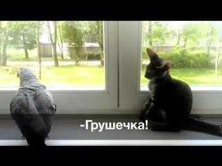 Попугай Кроша отчаянно старается подружиться с кошечкой Грушей. Однако, Груша взаимностью не отвечает