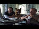 Kommissar Rex 9x01 Attentat auf Rex