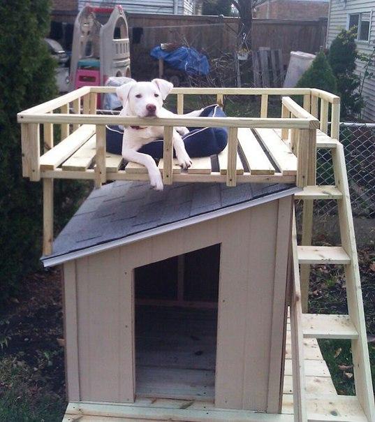 Идея двухэтажного домика для собаки. (4 фото) - картинка
