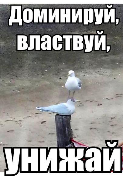 http://cs310122.vk.me/v310122325/1e41/bCgjWtDkDY4.jpg