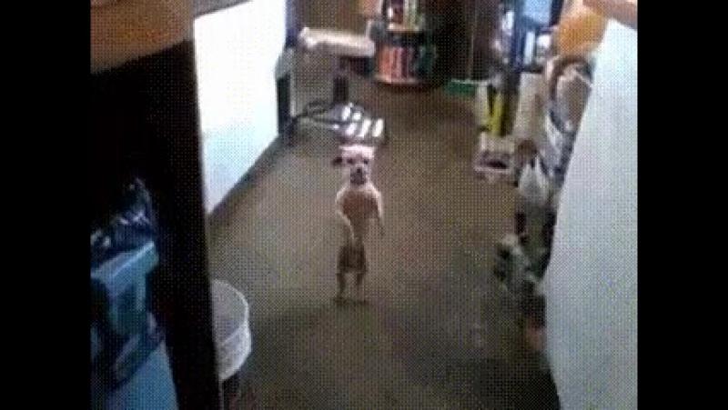 -Где я научился танцевать? В семье, нас было семеро и один горшок на всех...