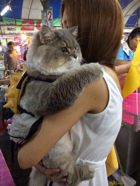 Это Бон Бон — огромный пушистый кот, с которым хочет сфотографироваться каждый прохожий.