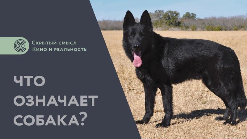 Что означает собака Дополнение к разбору Сталкера Философия мифологии