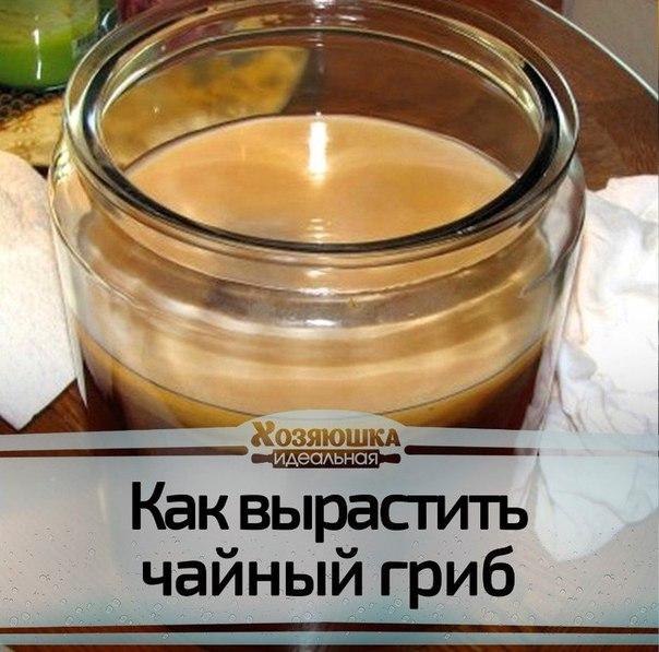 Как делать чай из грибов
