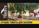🍅 Лучшие томаты черри для засолки гибриды из серии Земледелец от Партнёра 7 дач
