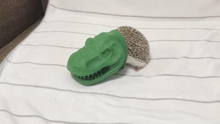 """Uni Toro / うに12392;ろ on Instagram: """"- Stumble T-Rex 🐊😱💦 . 「ガオ〜、あひゃーーー汗」 . 久しぶりにティラノサウルスの着ぐるみに入って、見事につまづいた うにさんです。 . うにさーーん😱 久しぶりだったのでミルミルで釣ってみました…"""""""