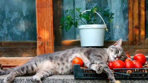 коты и цветы BpUklymbQv0