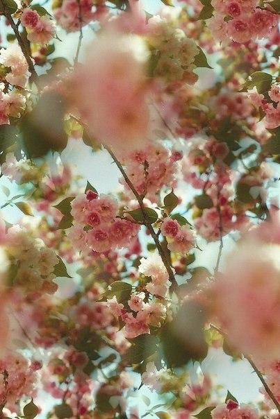 Цветочные и растительные фоны - Страница 3 HfPuClLVSxM