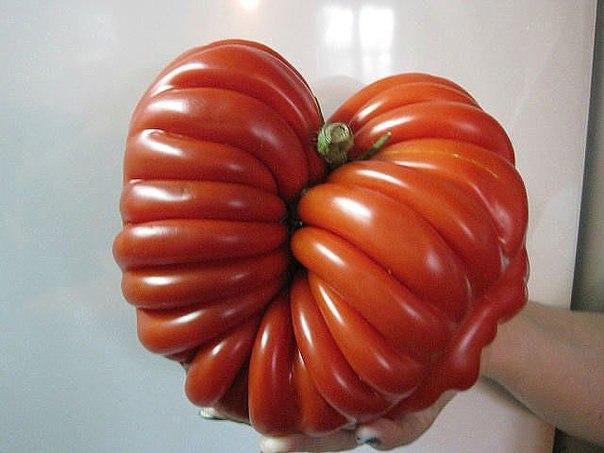 10 ЗАПОВЕДЕЙ при выращивании томатов!