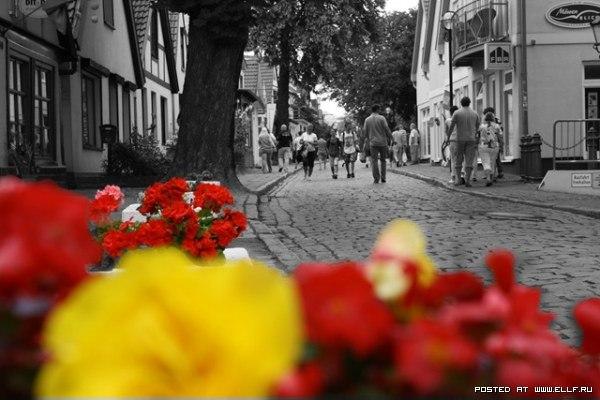 Чорнобіле фото кольорові квіти