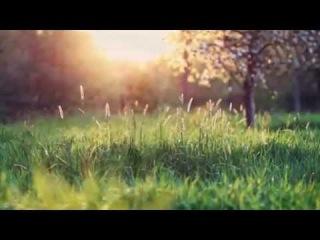 Необыкновенно красивое видео для релаксации. Мурррр!!!