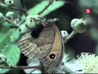 BBC Мир природы. Исчезнувшие острова