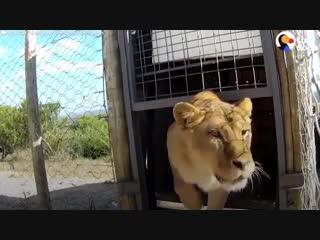 Не покупайте билеты на шоу с животными! Не ходите в цирк!