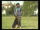 Собаки от А до Я дрессировка и выучка