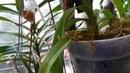 Орхидеи типа Ванда Почему я сейчас содержу их в горшках В мешочках osmocote