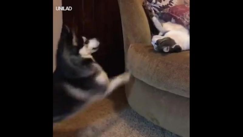 Энергичный пес