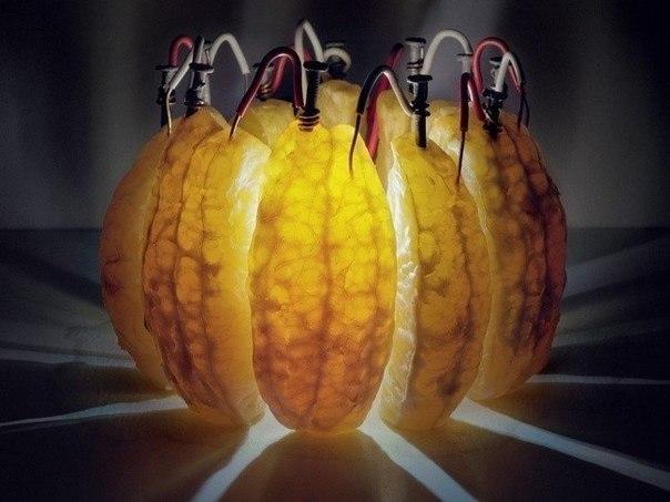Дольки одного апельсина вырабатывают достаточно электричества — 3,5 вольта — для питания светодиода. Лимонная кислота, содержащаяся в составе этого плода, служит электролитом, проводя электроны от оцинкованных гвоздей к медной проволоке. Снимок сделан с выдержкой 14 часов фотографом Кайлабом Чарлэндом.