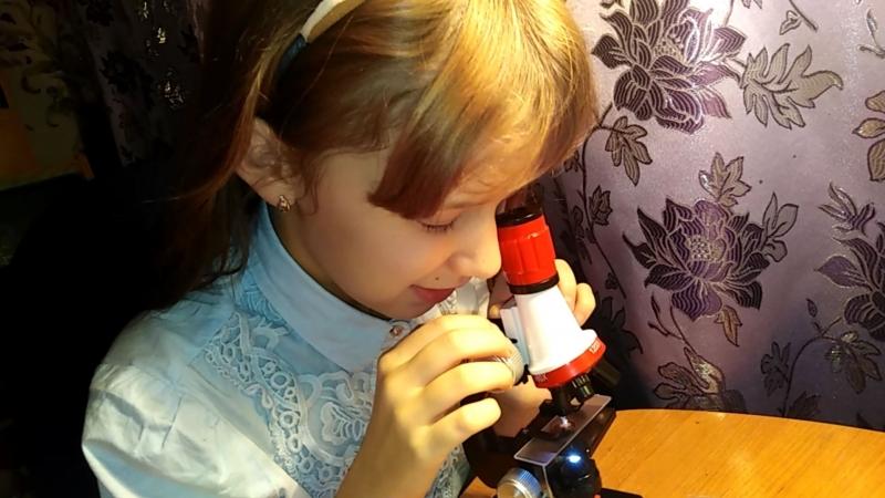 Что можно увидеть в домашний микроскоп?!