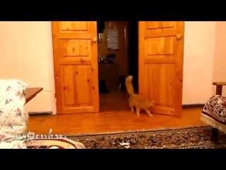 Прикол с игрой марио и кошкой