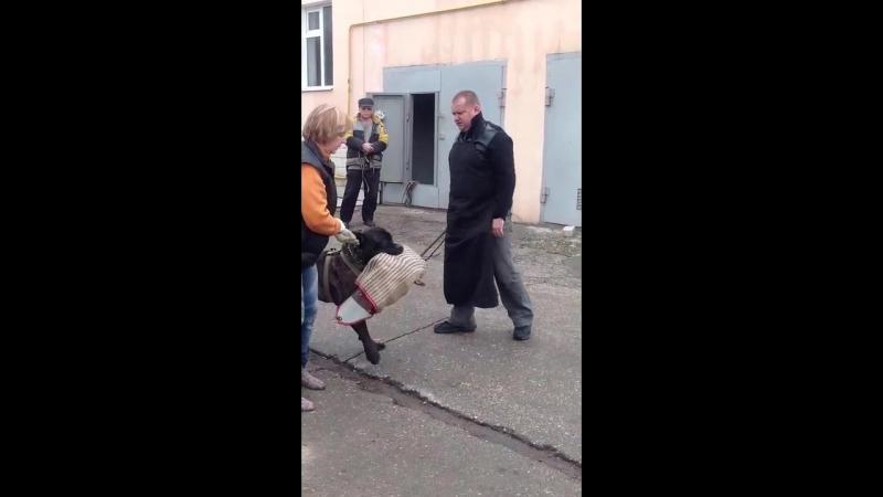 ЗКС - Нападение незнакомца во дворе