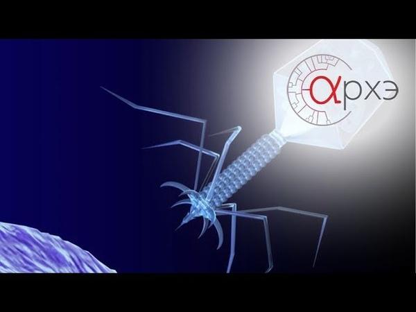 Андрей Летаров: Бактериофаги и концепция вируса. История ключевой идеи
