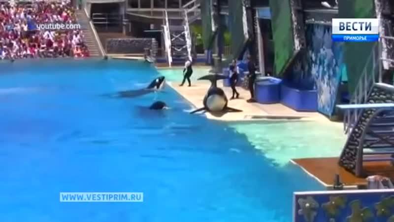 Китовая тюрьма в бухте Средняя под Находкой возмутила мировую общественность