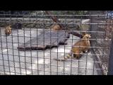 Зоопарк !!!!!