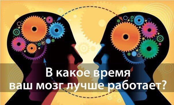 Когда наш мозг способен на максимум проявлять работоспособность: