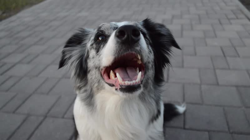 Dog tricks | Border Collie Yuki | 21.05.19