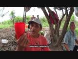 Индейцы брибри_ матриархат и легенды - из Коста-Рики