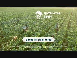 Секреты качества Gerber. Почему мы выращиваем груши в Италии