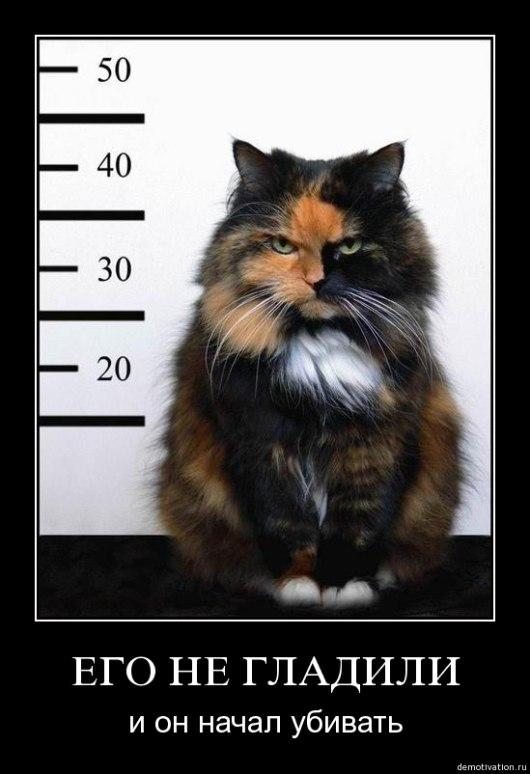 Признаки того что кот хочет вас убить