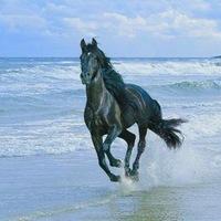 Своя Лошадь, 23 января , Переволоцкий, id211941097