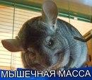 Антон Митюрёв фотография #17