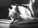 Private Life of a Cat 1947 Experimental Film About Cats! Alexander Hammid Maya Deren