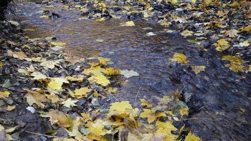 Stream. October. Осенний ручей.